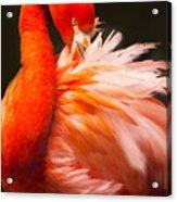 Flamingo Fluff Acrylic Print