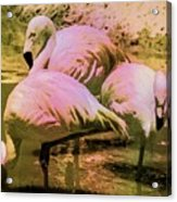 Flamingo - Id 16217-202804-4625 Acrylic Print