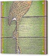 Flamingo II Acrylic Print