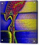 Flamingo IIi Acrylic Print