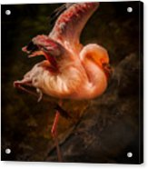 Flamingo In Darkness Acrylic Print