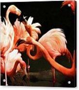 Flamingo Kisses Acrylic Print