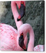 Flamingo Love Birds Acrylic Print