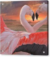 Flamingo Love Acrylic Print