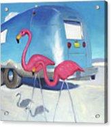 Flamingo Migration Acrylic Print