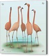 Flamingo Mingle Acrylic Print