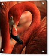 Flamingo Poised Acrylic Print