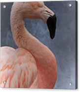 Flamingo Profile Acrylic Print
