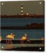 Flamingo Sunrise Acrylic Print