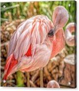 Flamingo2 Acrylic Print