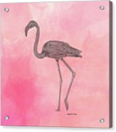 Flamingo3 Acrylic Print