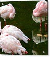 Flamingos 10 Acrylic Print