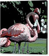 Flamingos I Acrylic Print