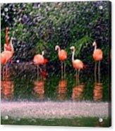 Flamingos II Acrylic Print