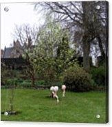 Flamingos On The Lawn Acrylic Print