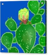 Flap Jack Cactus Acrylic Print