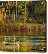 Flapping For Fall Acrylic Print