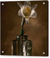 Flashlight Series Easter Lily 3 Acrylic Print