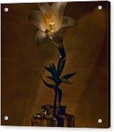 Flashlight Series Easter Lily 4 Acrylic Print