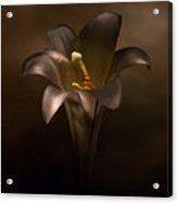 Flashlight Series Easter Lily 6 Acrylic Print