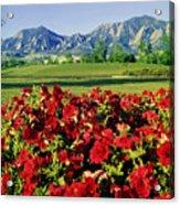 210546-v-flatirons And Flowers V  Acrylic Print