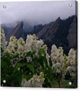 Flatirons White Lilacs Acrylic Print