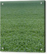 Flax Acrylic Print