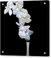 Fleur Blanche Acrylic Print by Cecil Fuselier