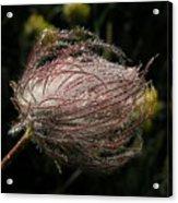Fleur Coeur Acrylic Print