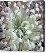 Fleur De Feu 3 Acrylic Print