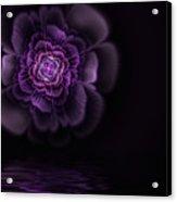 Fleur Acrylic Print by John Edwards