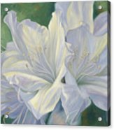 Fleurs Blanches Acrylic Print