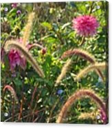 Fleurs Des Champs Acrylic Print