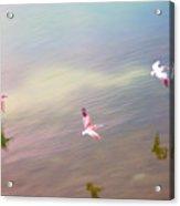 Flight Impressions Acrylic Print