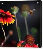 Flight Of A Honey Bee Acrylic Print