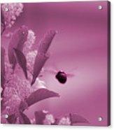 Flight Of Princess Bumble Bee Acrylic Print