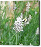 Flight Of The Bumblebee Acrylic Print