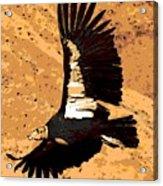 Flight Of The Condor Acrylic Print