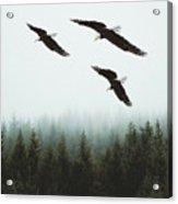 Flight Of The Eagles Acrylic Print