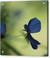 Flight Of The Lobelia  Acrylic Print