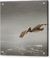 Flight Of The Pelican Acrylic Print