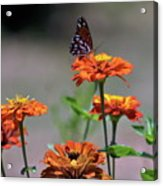 Flitting About Acrylic Print