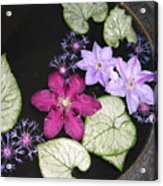 Floating Clematis Acrylic Print