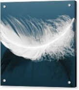 Floating Feather Acrylic Print