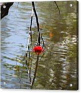 Floating Flower Acrylic Print