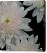 Floating Flower Acrylic Print