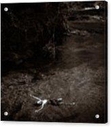 Floating In Light Acrylic Print by Scott Sawyer