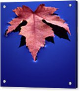 Floating Leaf 2 - Maple Acrylic Print