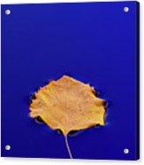 Floating Leaf 3 - Birch Acrylic Print