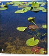 Floating Leaves Acrylic Print